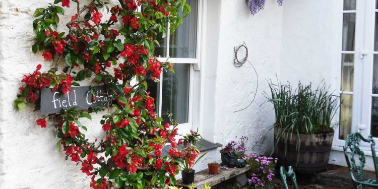 Devon Bed and Breakfast accommodation